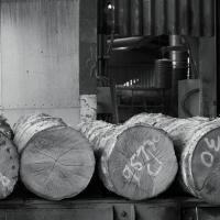 logs lie in wait at helmdon as Stephen works his way through one english oak log at a time on the stenner